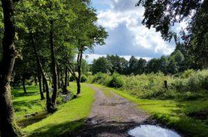 Wandelen in de Ardennen nabij camping Polleur